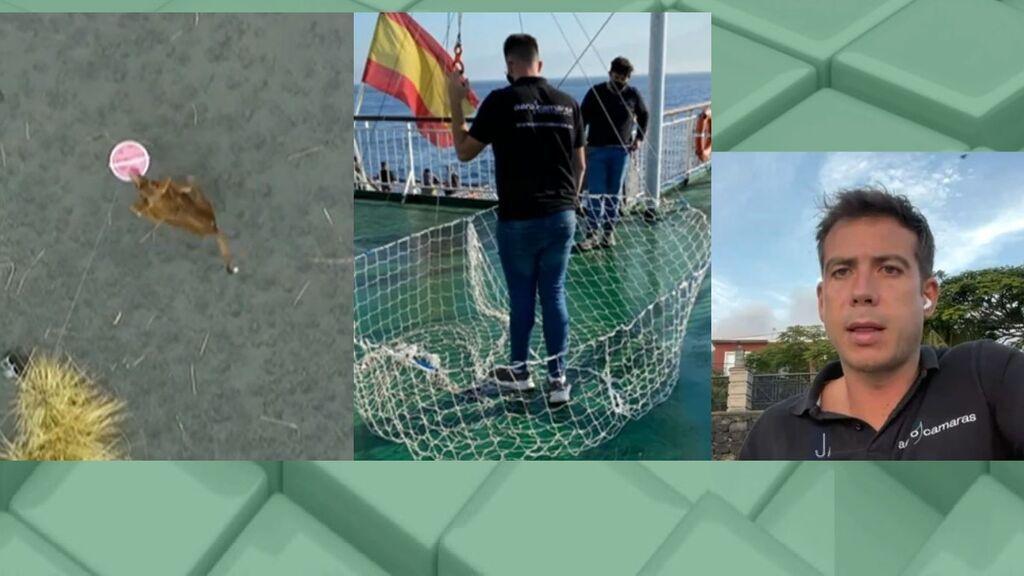 """El rescate por dron de los animales de La Palma: """"Técnicamente es lo más difícil"""""""