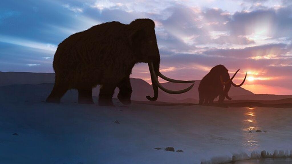 El loco proyecto para resucitar al extinto mamut en seis años y cómo salvaría el Ártico