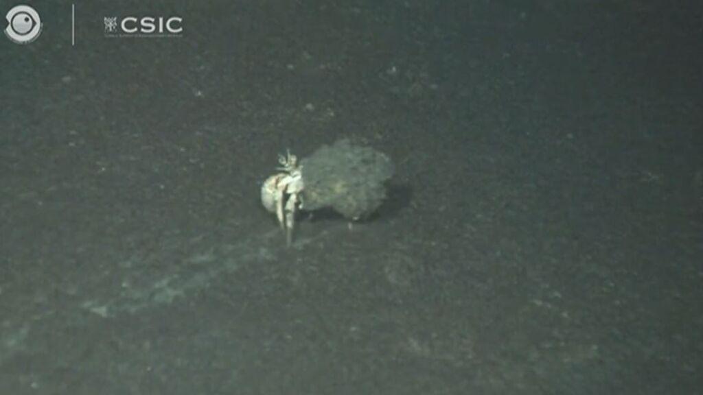 El oceanográfico muestra cómo está la vida bajo el mar cubierto de lava