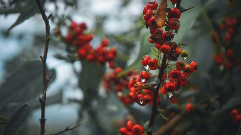 Mueren dos hermanos de 3 y 5 años tras intoxicarse al comer un fruto venenoso del jardín de su abuela