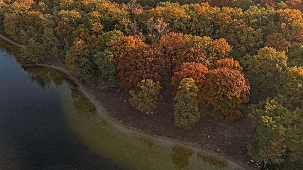 Un informe cifra los beneficios de la banca europea por financiar la deforestación: 400 millones al año