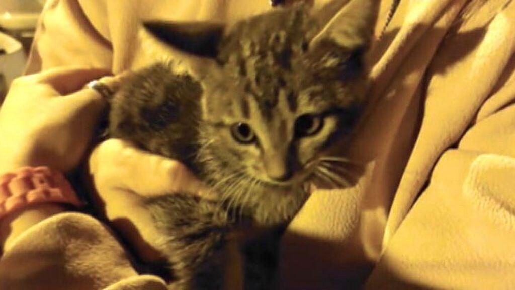 Rescatan a un gatito atrapado en el motor de un coche en Sevilla