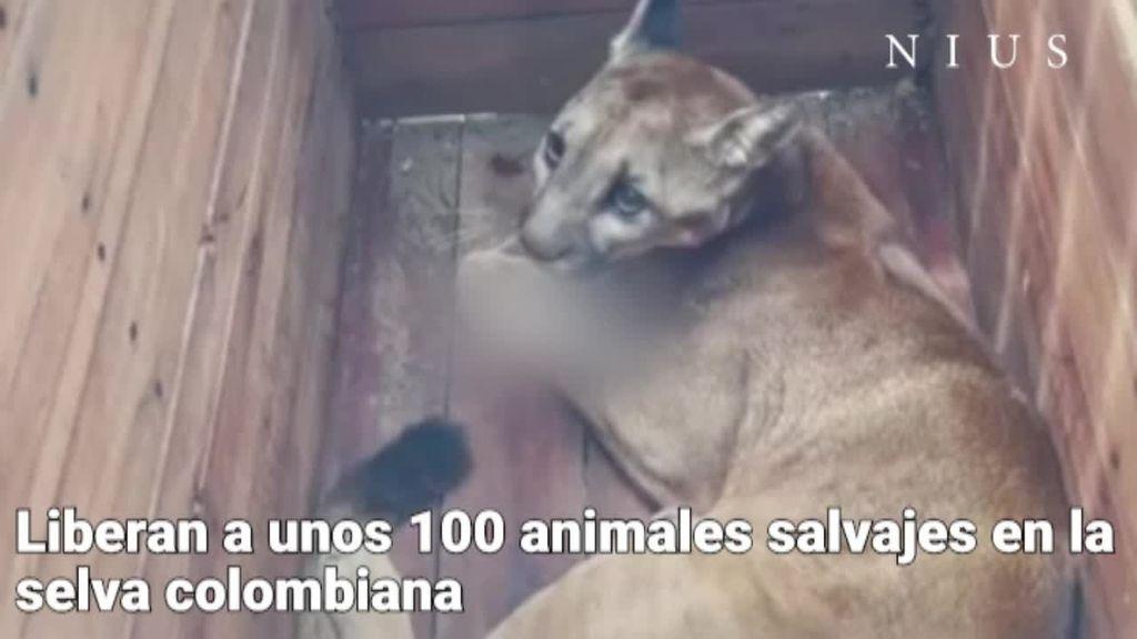 Liberan en Colombia a 100 animales salvajes cazados para experimentar y vender como mascotas