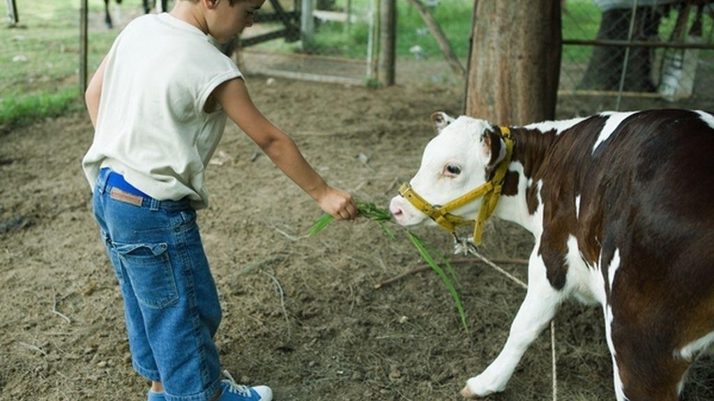 Niño en granja