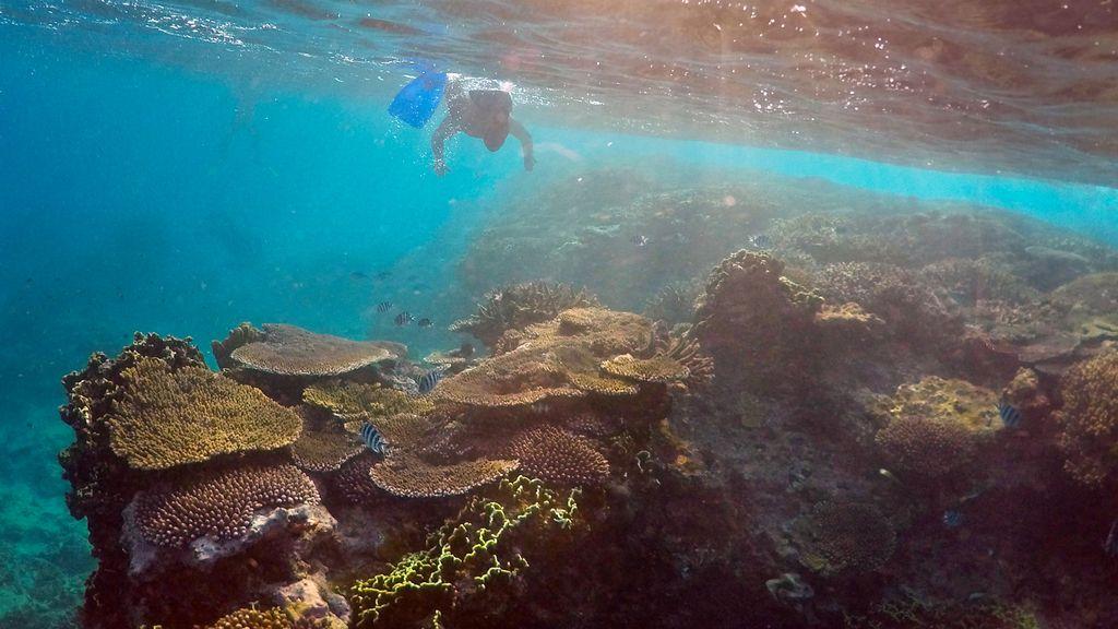 Buceando rodeado de corales