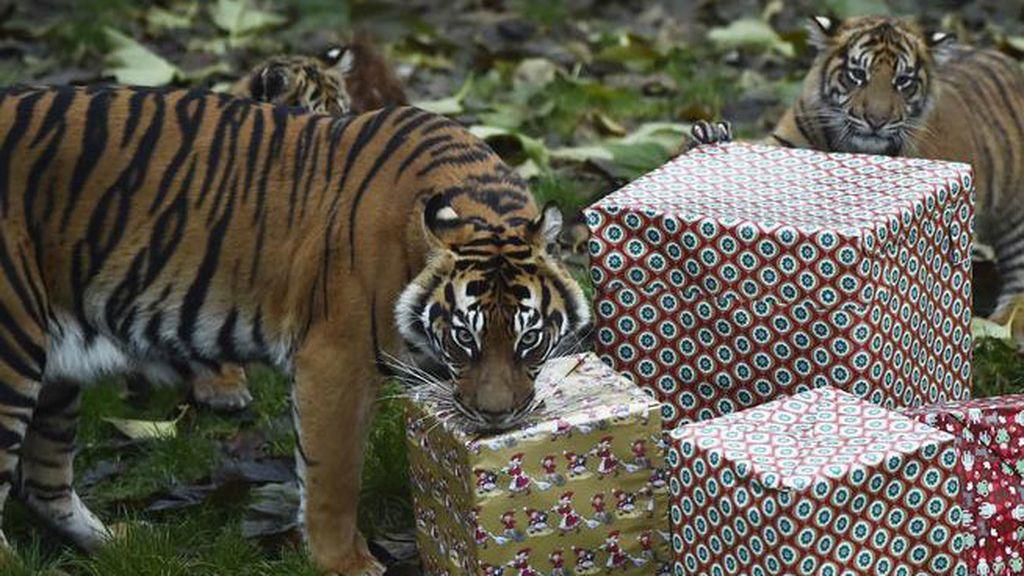 Los animales descubren la Navidad