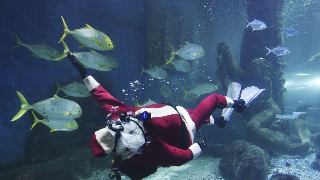 Navidad en el Acuario de Melbourne