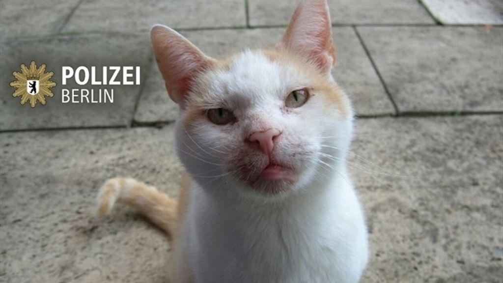 La Policía pide discreción a los berlineses con un 'tuit' con la foto de un gato