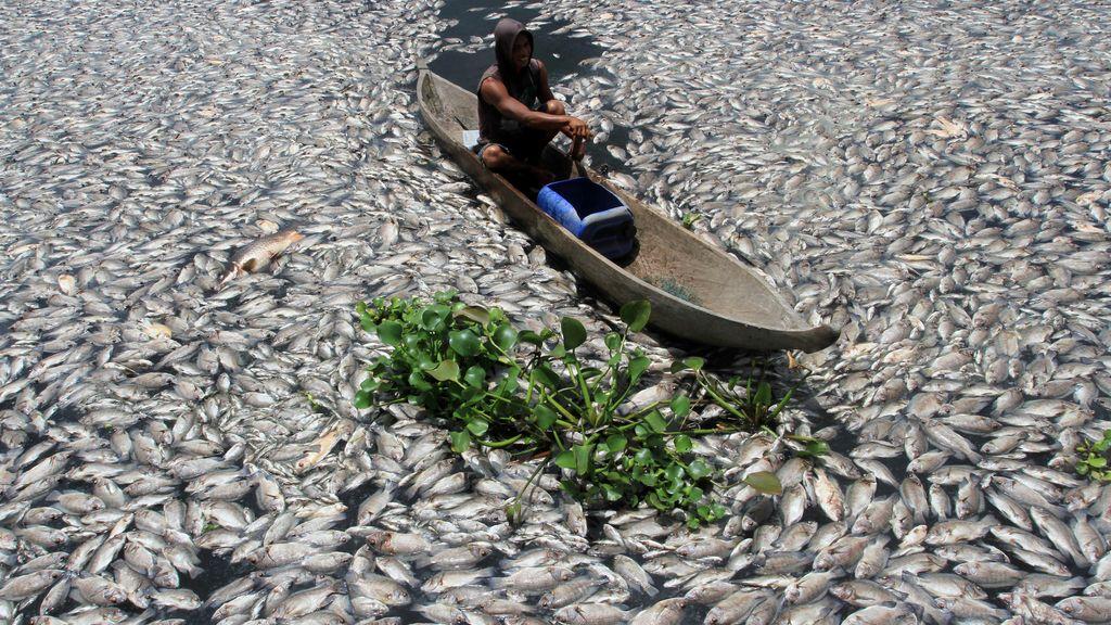 Mueren miles de peces en un estanque artificial en Sumatra