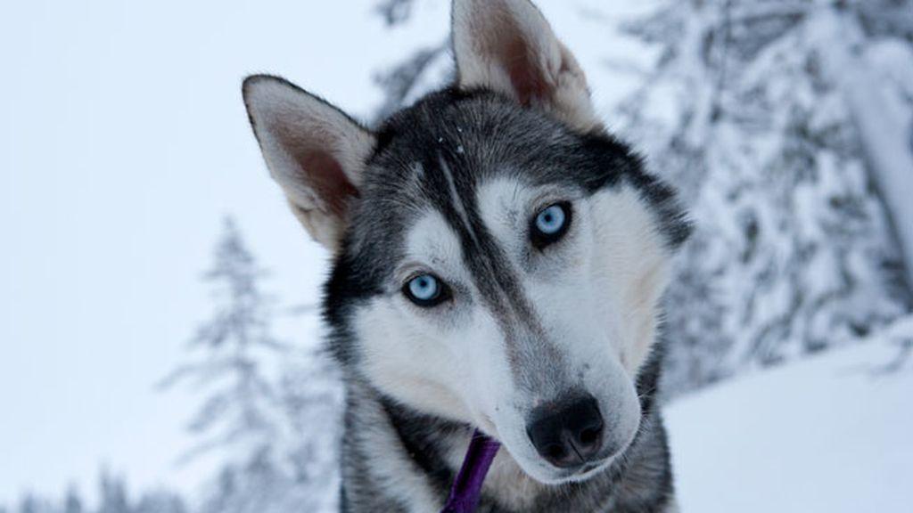 Un estudio establece que los perros tienen una memoria similar a la de los humanos
