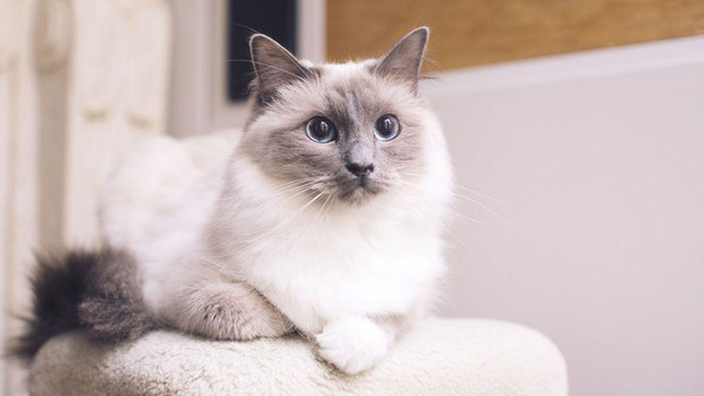 Un gato apoyado sobre un taburete