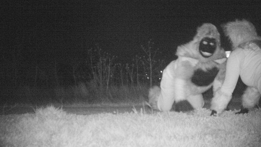Colocan una cámara oculta para comprobar si hay pumas y graban imágenes que les arrancan una sonrisa