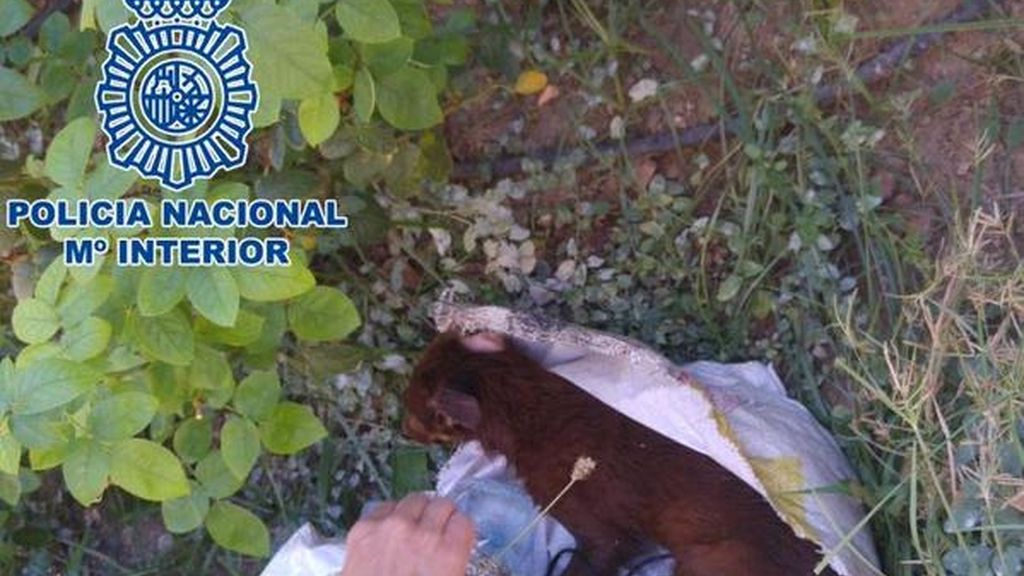 Detenido por arrojar un cachorro de perro a un contenedor en un saco hermético
