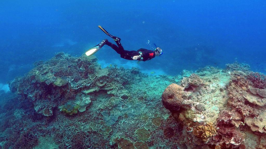 Un mundo diferente bajo el mar