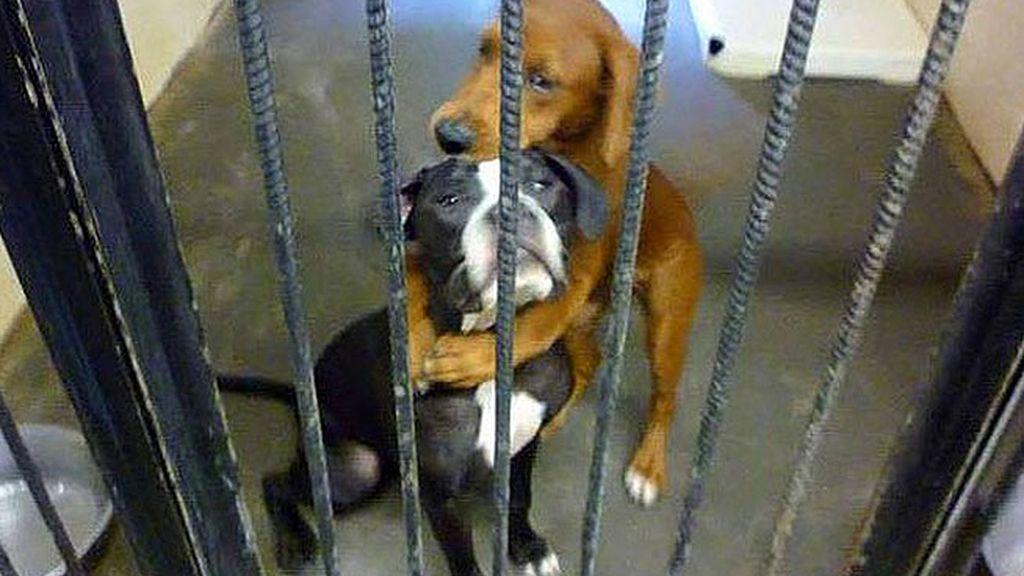 Kala,Keira,perros rescate, refugio de animales, animales abandonados