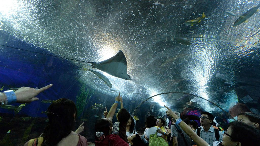 Acuario Singapur Underwater World