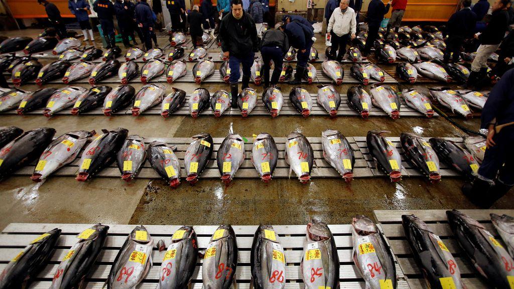 El precio del atún fresco, a subasta