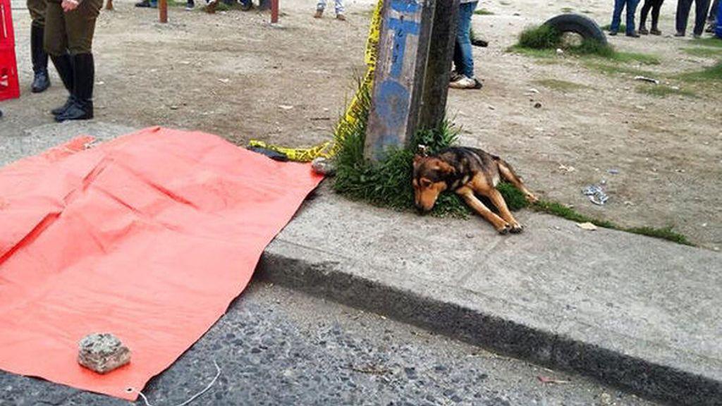Un perro 'vela' el cadáver de su dueño recién atropellado