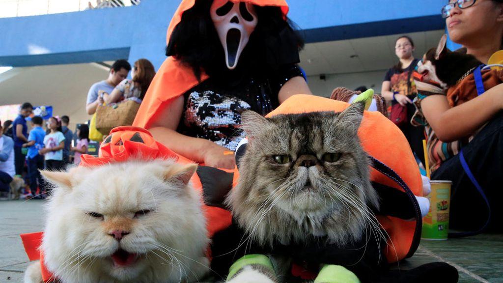 Mascotas de Scream
