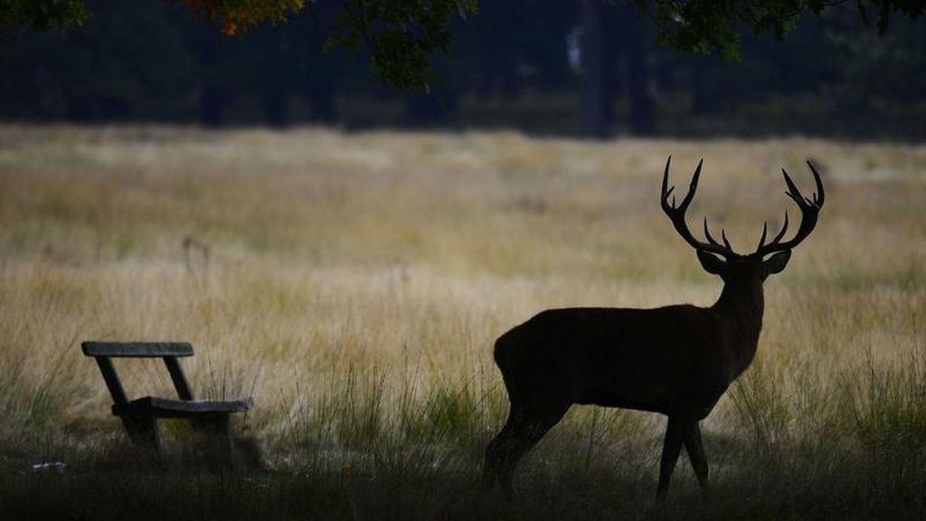 Un ciervo en la sombra