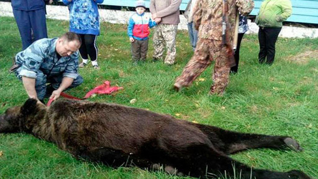 Estudiantes rusos se hacen 'selfies' con el cadáver de un oso que entró en su escuela