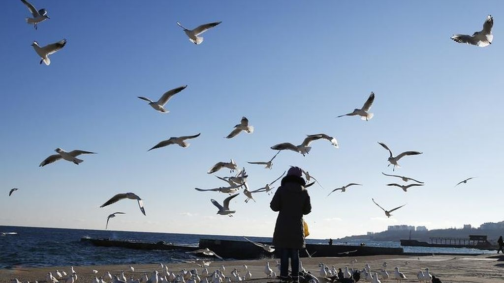 Alimenta a los pájaros