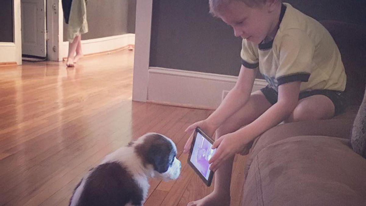 Este perro quiere ser 'youtuber' aprendiendo con los 'videotutoriales' de la Red