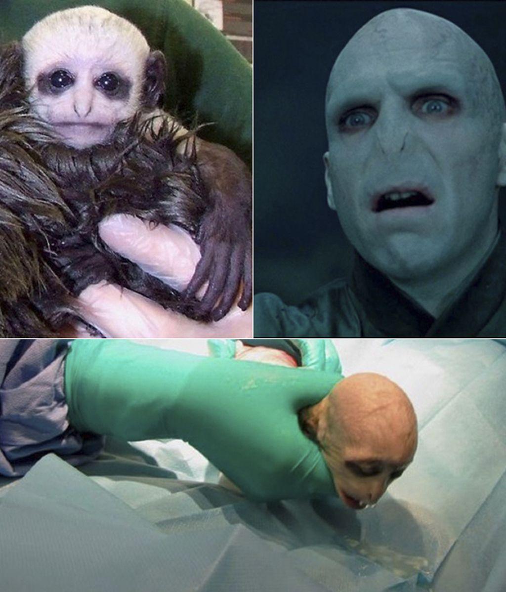 Montaje Voldemort y Voldemonkey