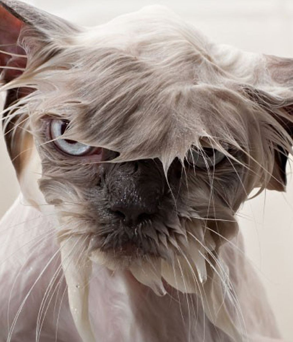 ¡Gatos pasados por agua!