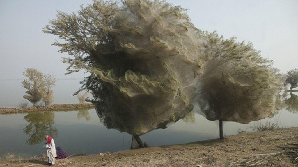 árboles en Pakistán