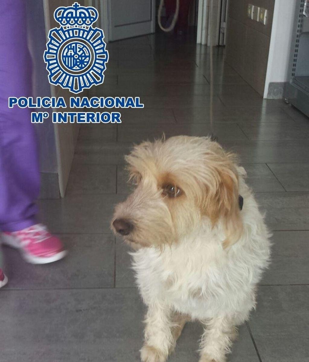 Detenido un hombre por golpear, dar patadas y morder a un perro pequeño en Gran Canaria