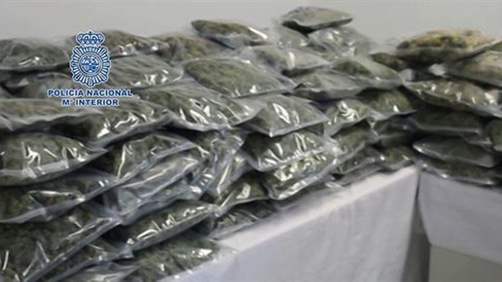 Incautados en Murcia 110 kilos de cogollos de marihuana con destino a Reino Unido