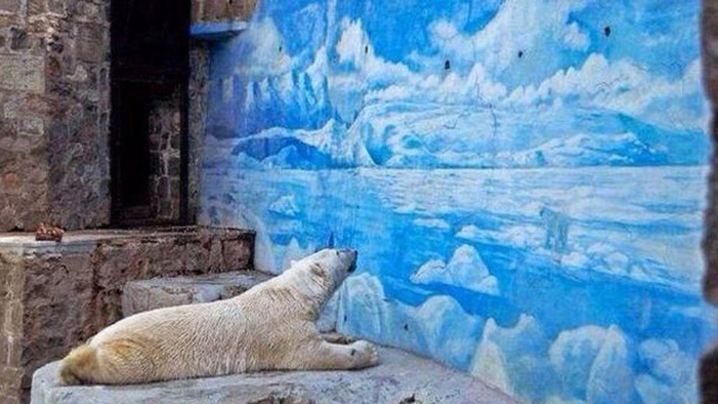 Muere Arturo, el animal más triste del mundo