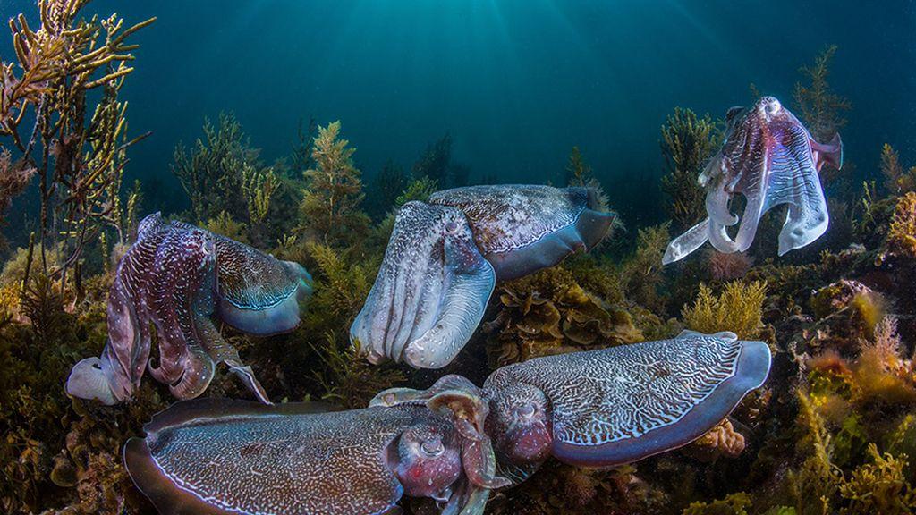 Cortejo colectivo, por Scott Portelli, Australia