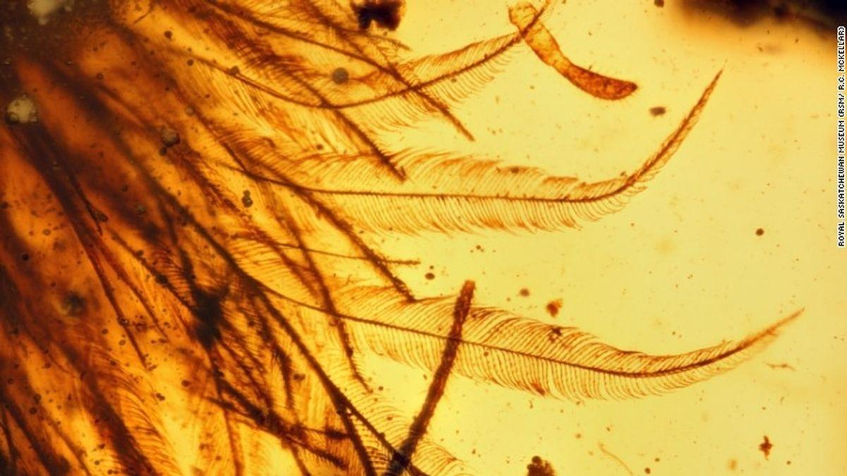 Aparecen restos de una cola de dinosaurio conservada en ámbar