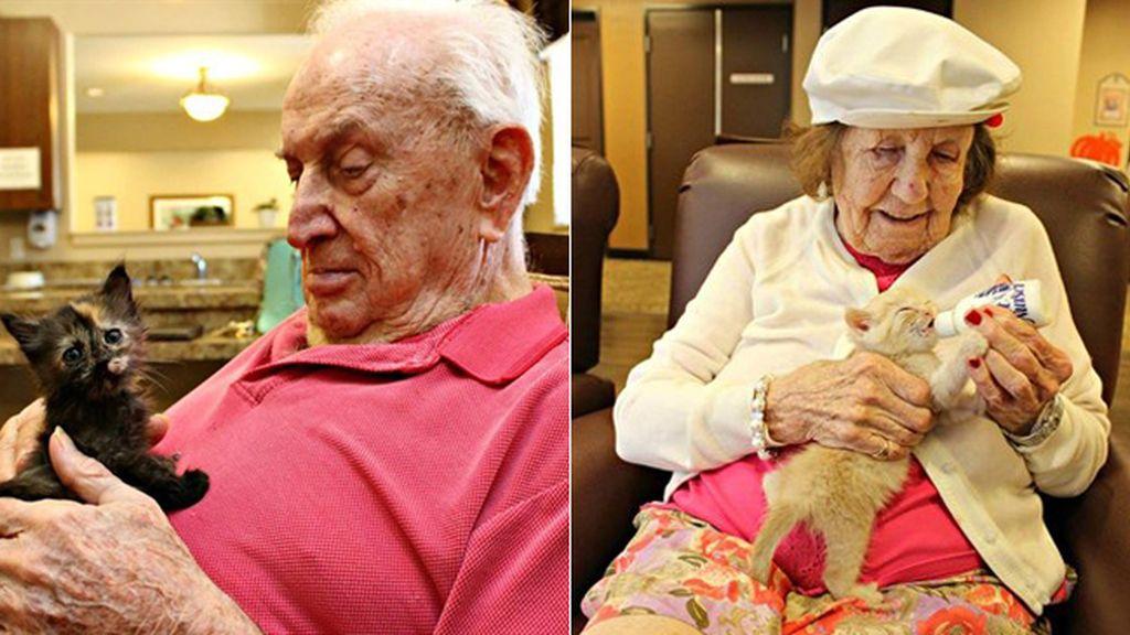 Gatos abandonados encuentran el cariño en una residencia de ancianos