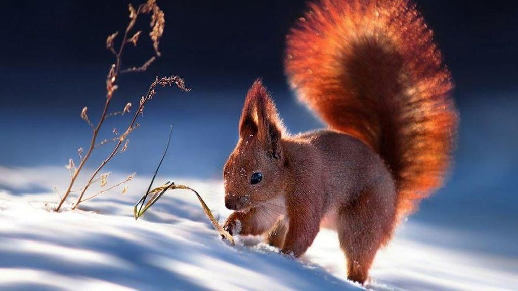 Los animales más bellos, tras el objetivo de Sergey Polyusho