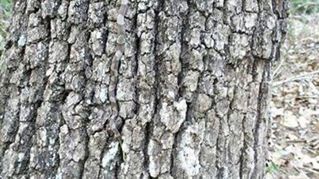 ¿Dónde está el animal que se oculta en este tronco?