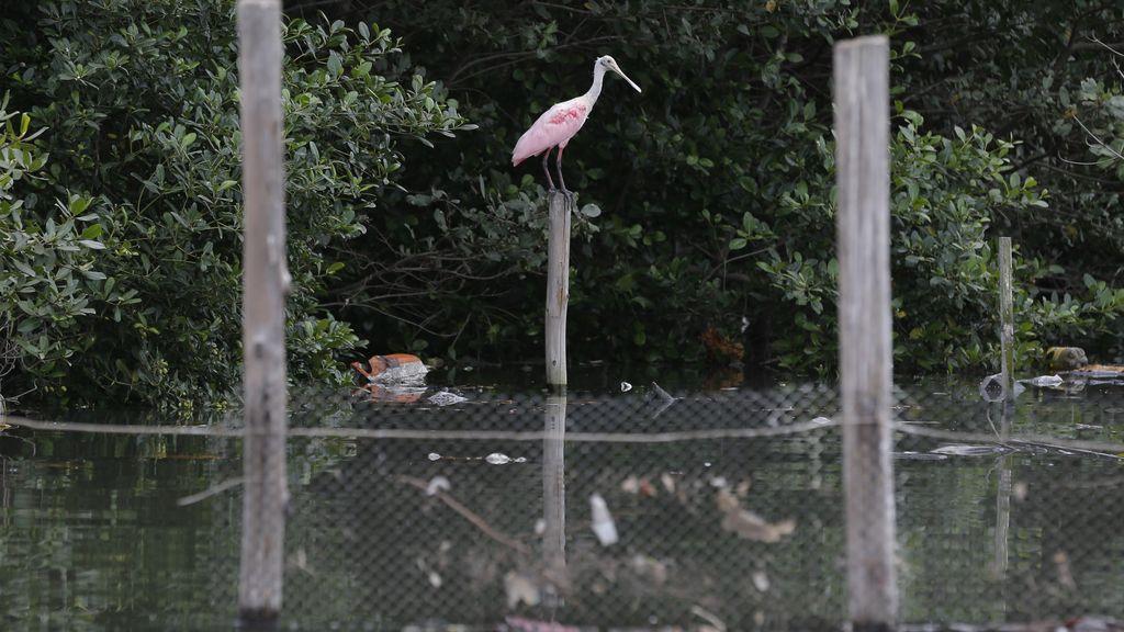 Los animales evitan tocar el agua de Río de Janeiro