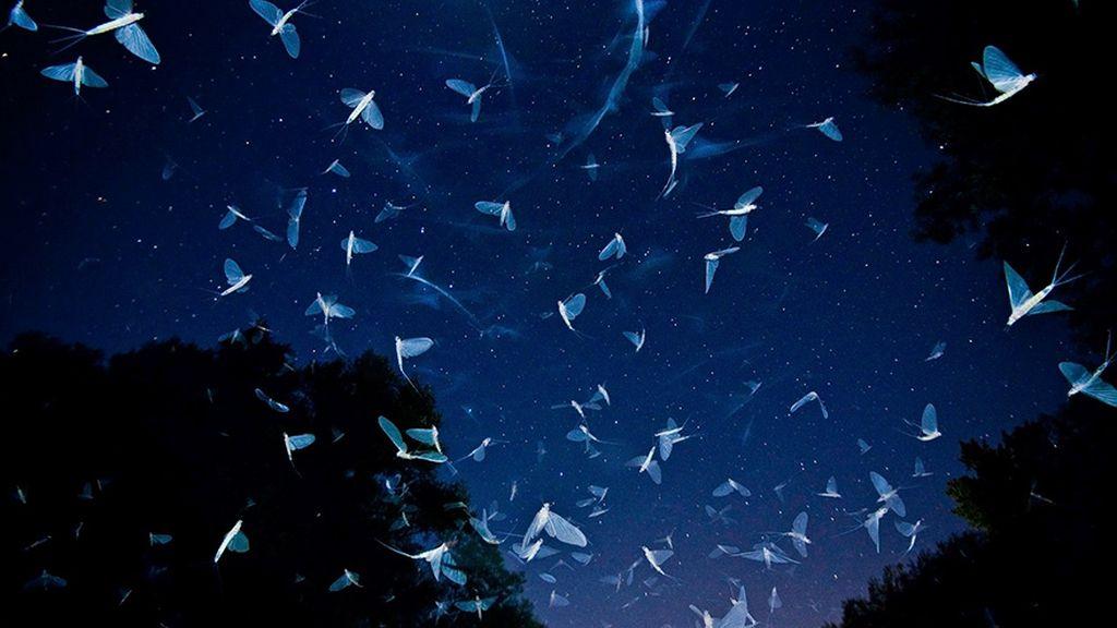 Enjambre bajo las estrellas, por Inmre Potyó, Hungría