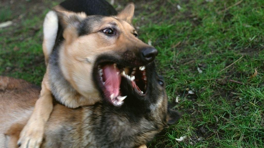 perro, mordedura