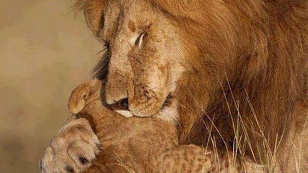 Los besos más tiernos del mundo animal