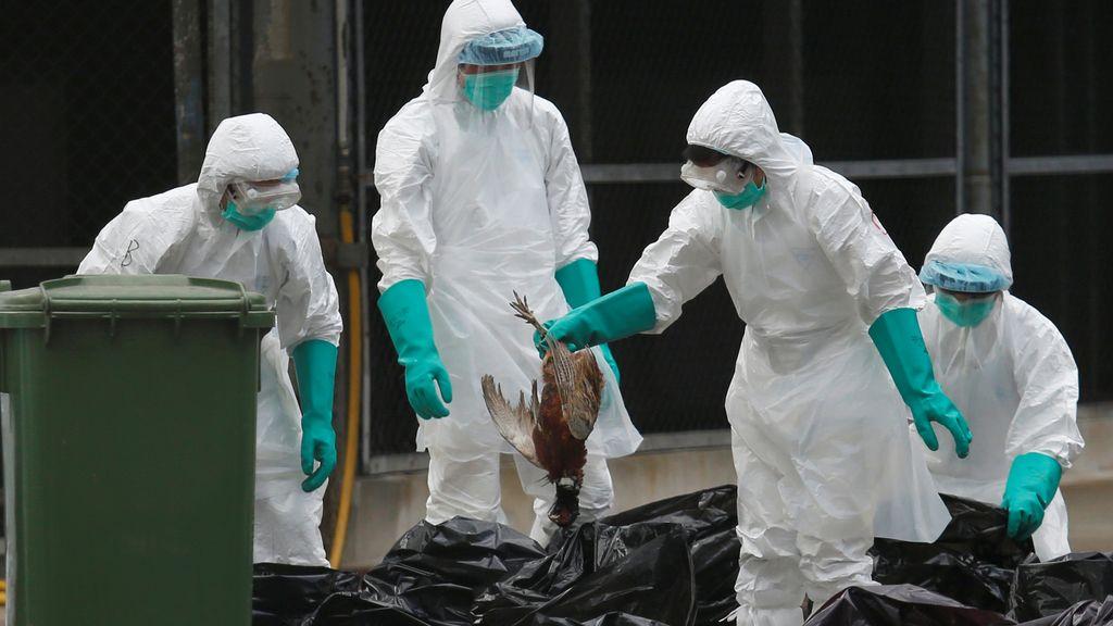 La gripe aviar en  Hong Kong