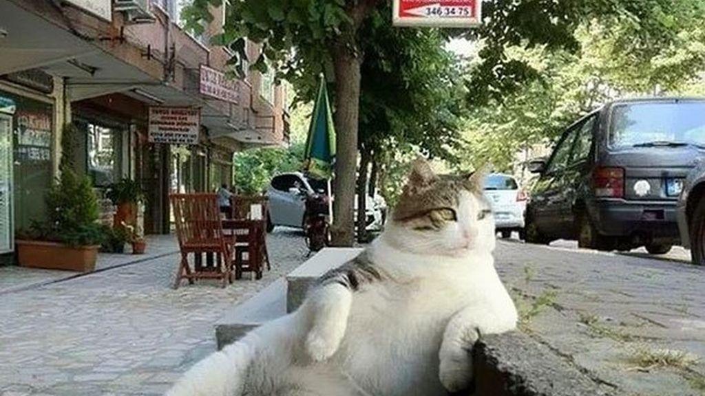 El gato más relajado de internet