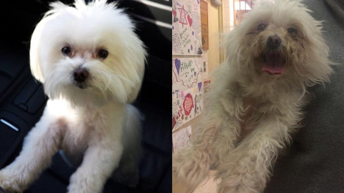 Después de tres años, esta perrita vuelve a su casa