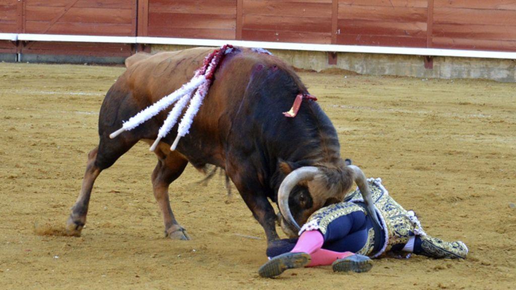 Fuerte cogida del torero Roca Rey en Palencia