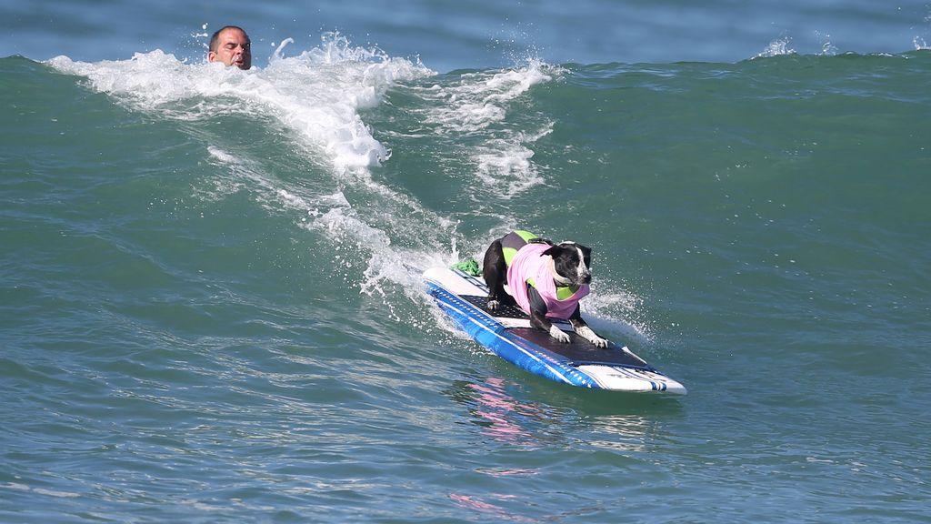 Los perros también saben surfear