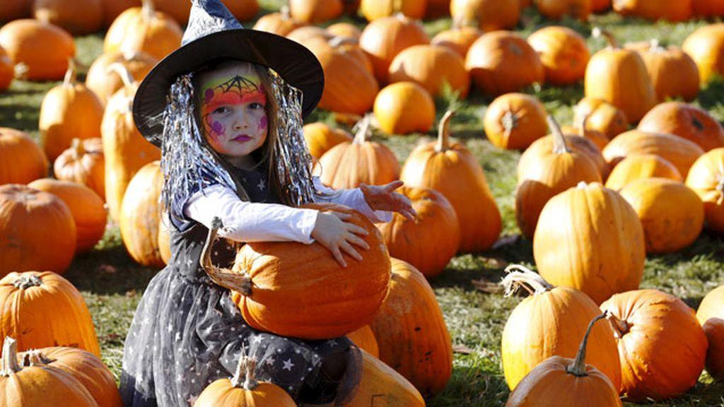 bruja, calabaza, Halloween