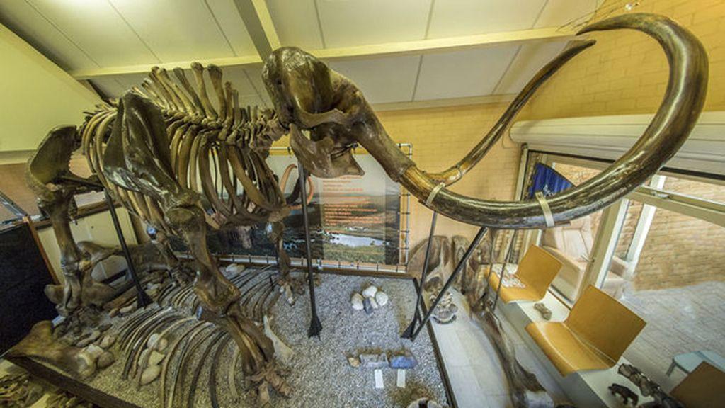 Se subasta el esqueleto de un mamut lanudo