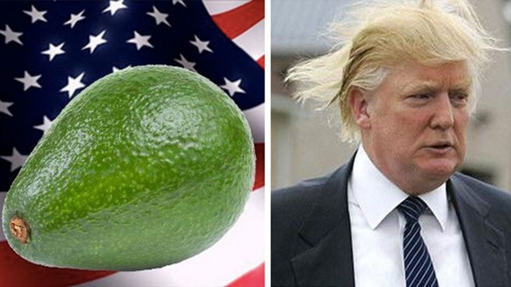 ¿A quién prefieres de presidente a Donald Trump o a un aguacate?